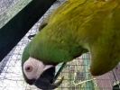 Zaginęła papuga